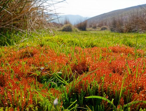 The Long Mynd: survey illustrates exceptional importance for bryophytes